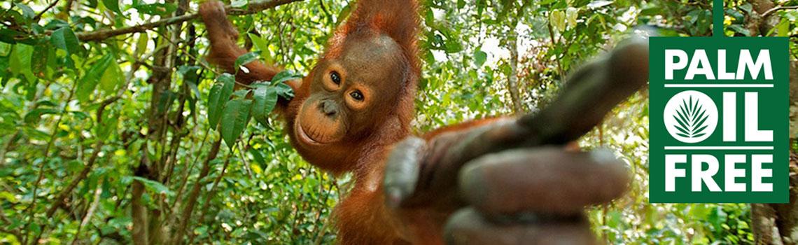 Palm Oil Free Ice Cream